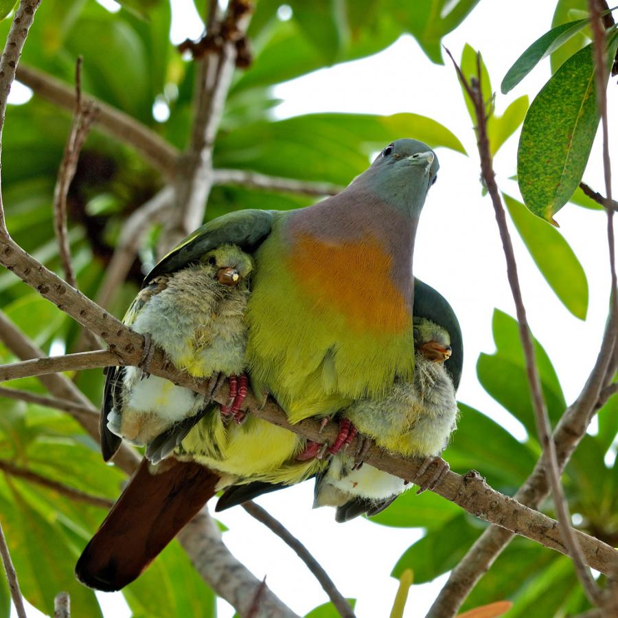 Image result for under his wings