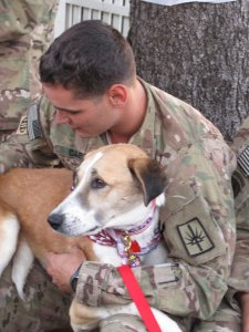 soldiers and their battle dogs2