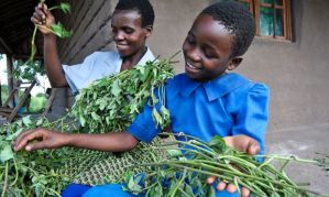 World Vision shows sweet potato story