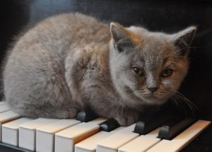 kitty on piano