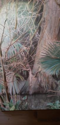 Florida wetlands photographed and painting