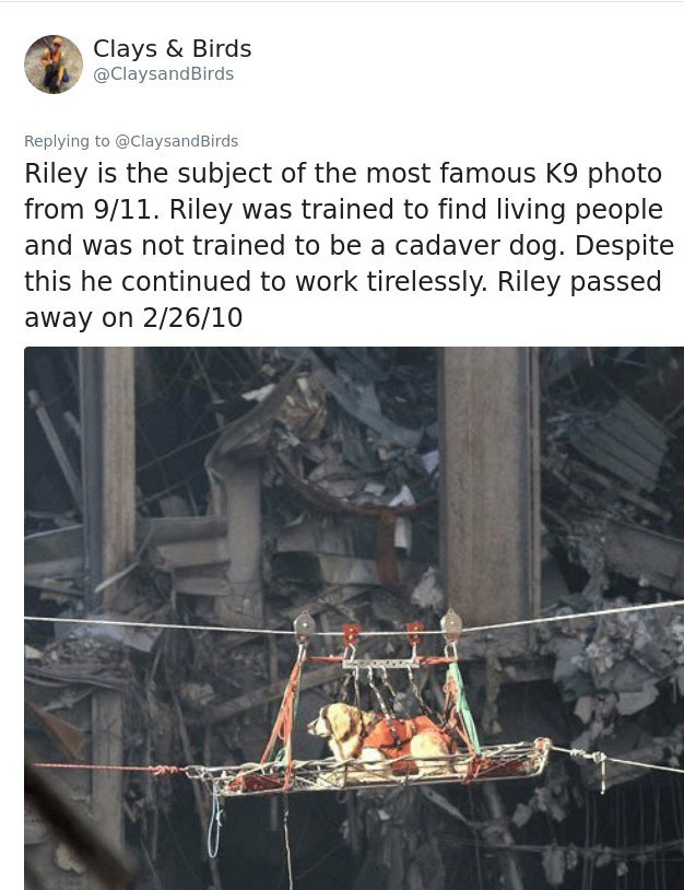 rescue dog of 9-11 Riley (2)