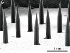 dissolvable microneedles or invisible tattoo quantum dots